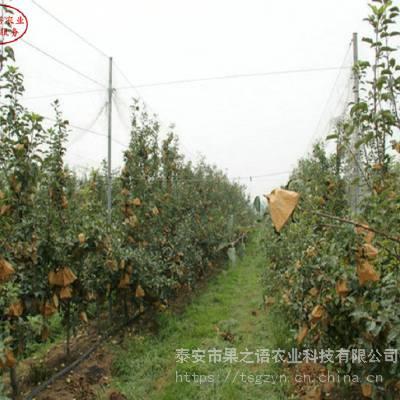鲁丽苹果树价格、鲁丽苹果树主产区欢迎您