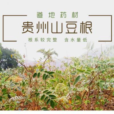 贵州原生态/仿野生山豆根种苗 岩苦参种苗 整株高25公分以上 植株完整 成活率高