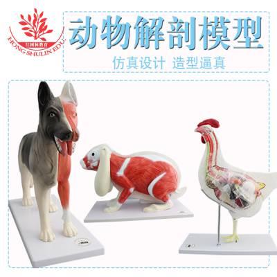 新品推畜牧专业大学用动物解剖模型狗猪羊牛兔骨骼和内脏解剖模型