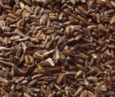 苍术苗本溪-品质优的苍术种苗-品质优良的苍术苗