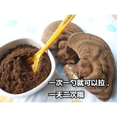 浙江康瑞纯野生灵芝超细粉出厂价