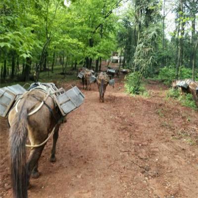 宁波骡马运输-骡马运输多少钱一吨-铜陵爱年骡马运输