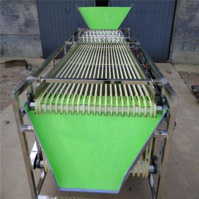 大型轨道式三华李分级机 全不锈钢304/201材质