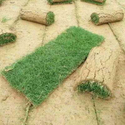 成都大量批发剪股颖草坪,品种齐全,十年老店,优质草坪