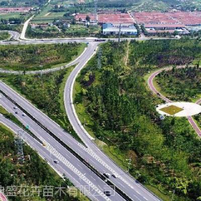 铁路公路边坡绿化工程树苗,高速防护坡绿化苗木供应栽植