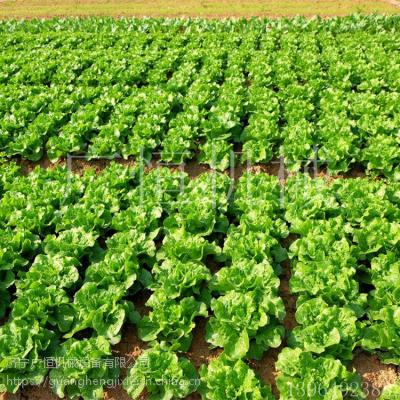 畅销定制双行汽油高粱播种机 人力小型蔬菜精播机 广恒