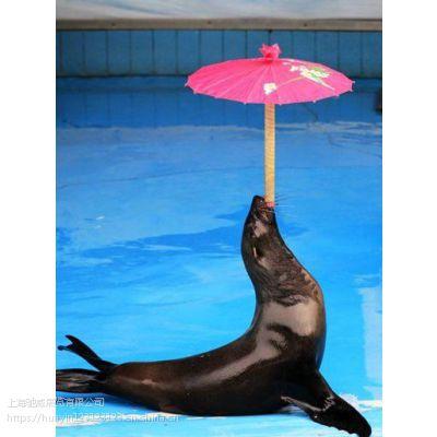 海狮表演租赁价格海洋主题活动策划海洋馆展览展示