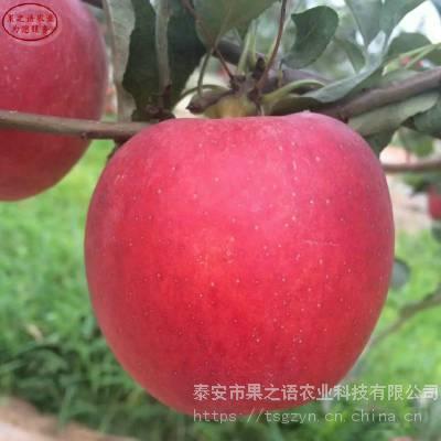 华硕苹果树苗批发、华硕苹果树苗报价一览表