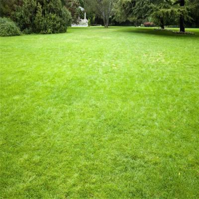假草皮价格 绿色假草皮 婚礼仿真草坪