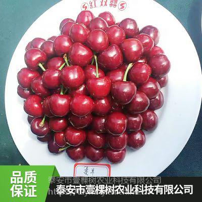 壹棵树农业砂蜜豆车厘子种苗种植技术