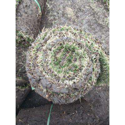 安康大量批发台湾二号,高成活率的高品质草坪