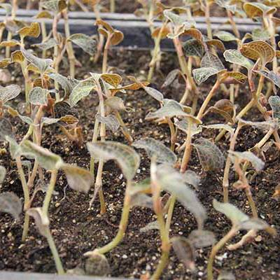 御贵草金线莲种植业的发展 让种植户收益了