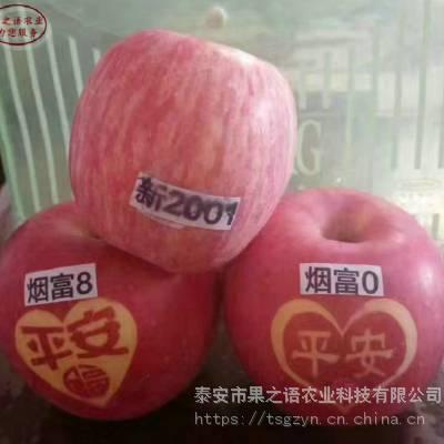 维纳斯黄金苹果苗价格、维纳斯黄金苹果苗出售