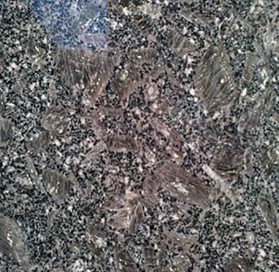 北京专用皇室珍珠好货源好价格 诚信互利 荣成程宇石材供应