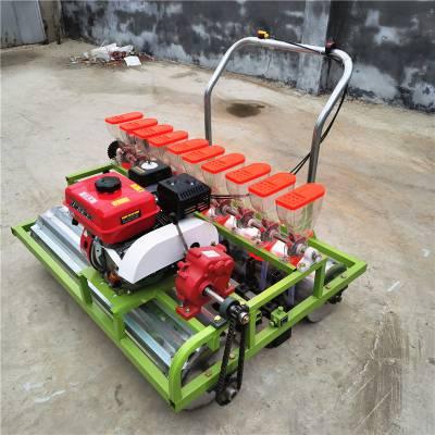 专业定做小型蔬菜种植机 蔬菜电动精播机 香菜菠菜播种机厂家优惠