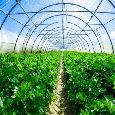 种植花卉薄膜温室大棚工程造价 七洲