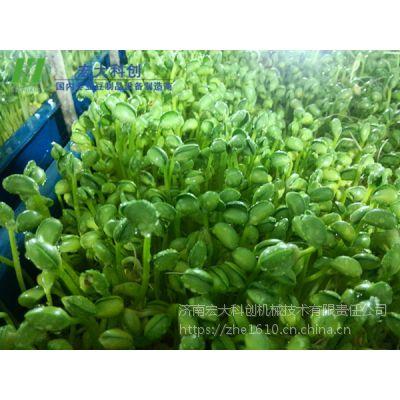 一机多用的新型芽苗菜机|多功能芽苗菜机设备|宏大购机包教技术