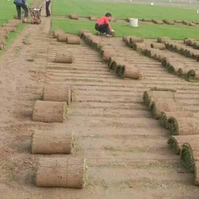 园林草坪草皮基地-园林草坪草皮-春风草坪质量保证(查看)