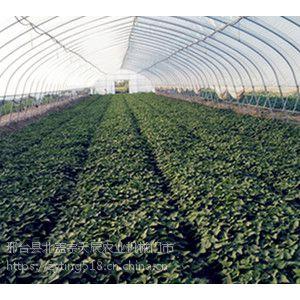 2019年哪些红薯红薯苗品种热销