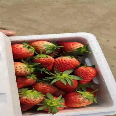 全明星草莓苗价格、草莓苗多少钱一棵、四季草莓苗哪里有