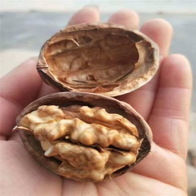 山东核桃树基地 美国垂铃六号核桃树 产量高 薄皮核桃树哪里有