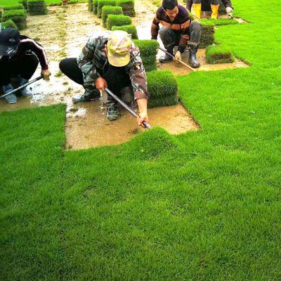 马尼拉草皮卷 百慕大黑麦草混播 湖南常德固土护坡用的绿化草坪出售价格 低价销售