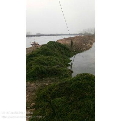龙虾苗 青虾 龙虾养殖设备 种虾