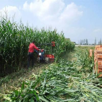 特制加高款专收芦苇玉米秸秆收割机图片