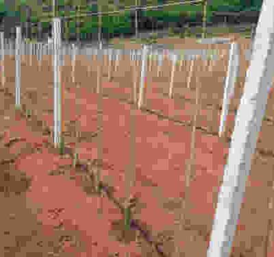 滴灌工程-湖北春苏农业-湖北滴灌