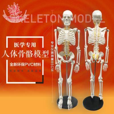 带脊柱脊椎 神经 椎间盘 医用骨架正骨教学模型 85cm人体骨骼模型