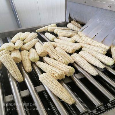 直销甜玉米蒸煮加工机械 固色蒸煮机 速冻水果玉米生产加工设备