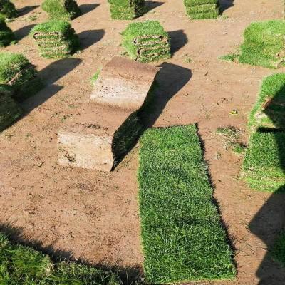 马尼拉草坪 广东深圳操场绿地用的绿化草种类批发价格 服务周到