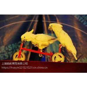 鹦鹉演出百鸟展览狮虎马戏团租赁 优质服务