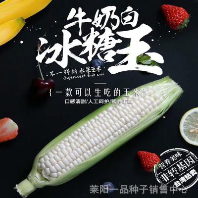 一品进口20度糖冰糖玉玉米种子_水果型玉米种子价格