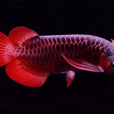 福州观赏鱼出售-福州观赏鱼-福州观赏鱼店
