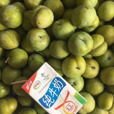 广东蜂糖李子树苗_蜂糖李子树苗哪种品种好