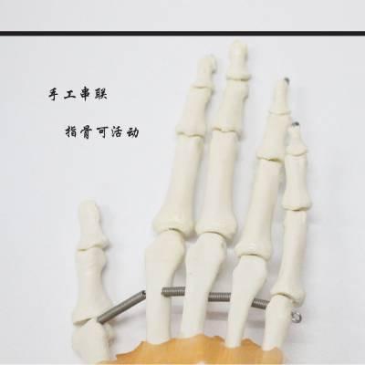 手关节附韧带各类骨骼关节模型医用教学模型