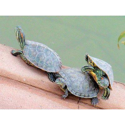 广西龟粮协会会长推荐通用多规格龟粮龟饲料加工设备