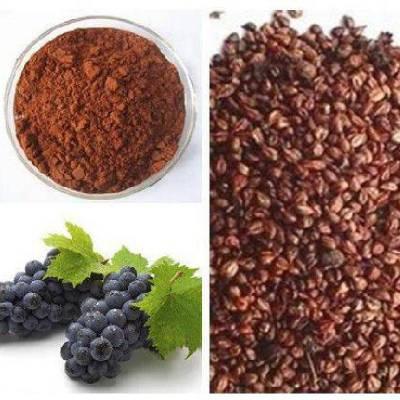 葡萄籽提取物 比例提取 10:1 UV检测 1公斤起订