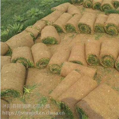 江苏草坪基地 马尼拉、四季青、早熟禾价格都很便宜