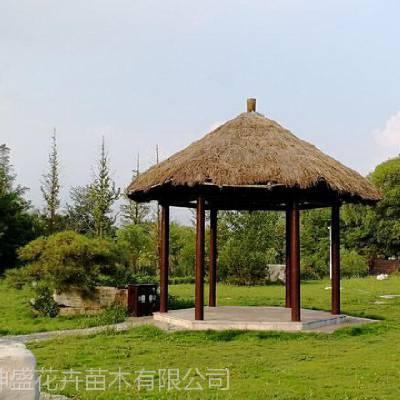 山东厂区绿化布置施工,项目部花园绿化植物供应