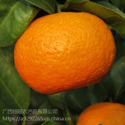 正宗广西荔浦县沙糖桔砂糖桔沃柑茂谷柑夏橙脐橙马水批发代购代收