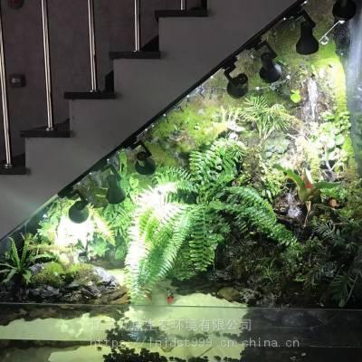 辽宁九点生态 雨林缸厂家 沈阳地区雨林缸