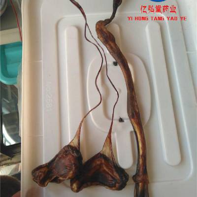 大条海狗肾功效好 还是小条海狗鞭功效好 真假如何区分
