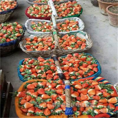 甘露草莓苗推荐品种甘露草莓苗一棵多少钱