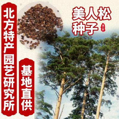 供应出售北方特产园艺研究所美人松种子