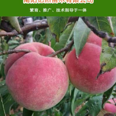 南阳桃树苗出售-亿然苗木(在线咨询)-南阳桃树苗