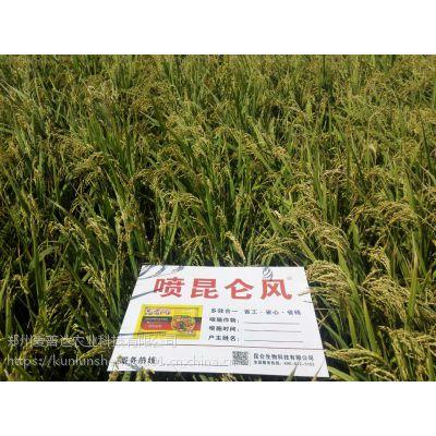 水稻叶面肥抗病效果,有效防治稻曲病
