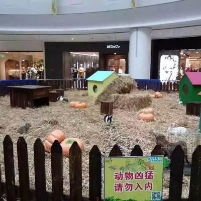 宠物兔和平鸽展览出租