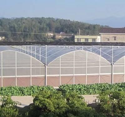 薄膜温室大棚种植、黔江区薄膜温室大棚、青州齐鑫温室园艺小唐